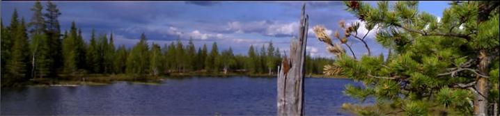 Bildet er lånt fra Lapland Trophy dott com